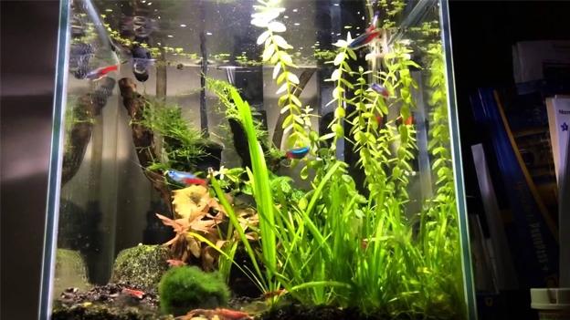 Aquascaping Neon Tetra Tank