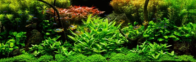 The Planted Tank