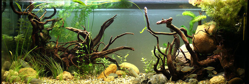 Biotope Style Planted tank