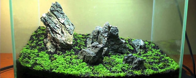 Cuba, a Carpeting Plant for Planted Tanks