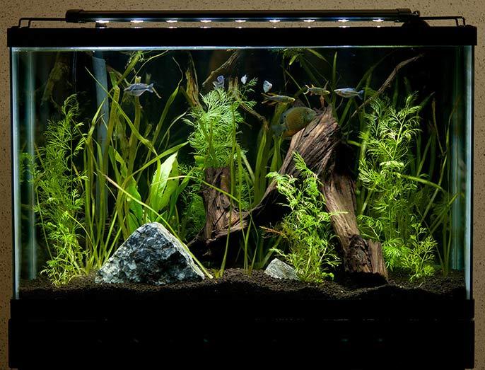 Beginner Lighting for Aquariums