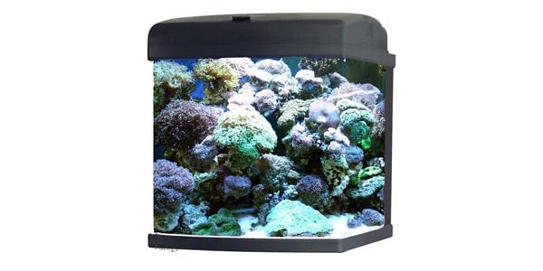 JBJ 28 Gallon Nano Cube Aquarium