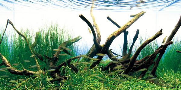 Aquarium Driftwood Tank
