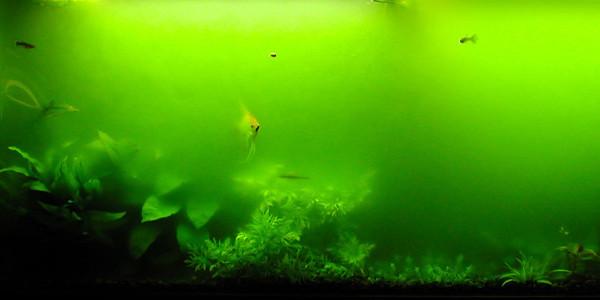 Aquarium algae breakout