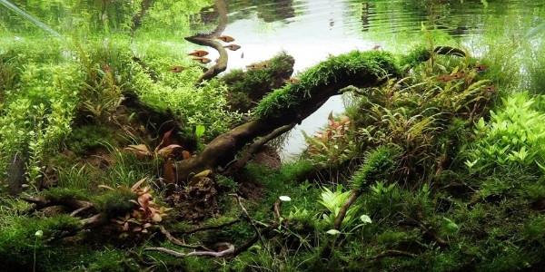 Jungle Aquascape Styles