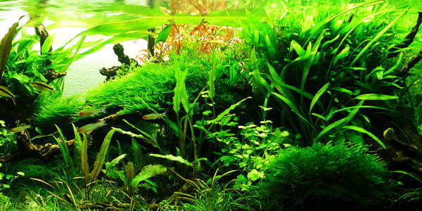 Jungle Aquascaping Style