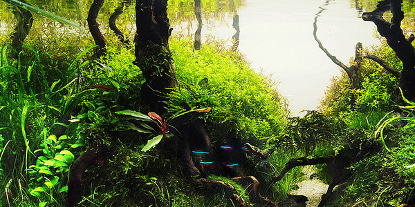 Jungle Style Aquascape