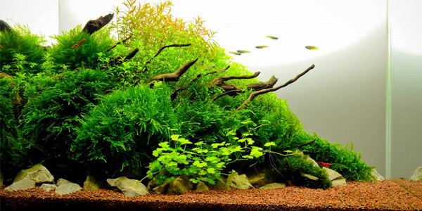 Nature aquascaping style