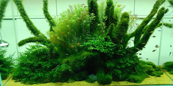 Nature style aquacape