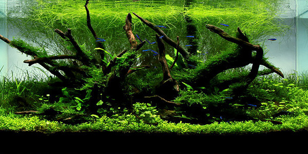 Nature style aquascaping