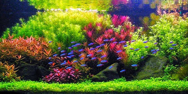 dutch aquascape styles