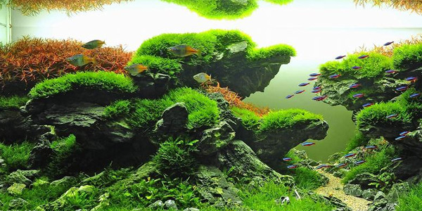 Taiwanese Aquascaping Style