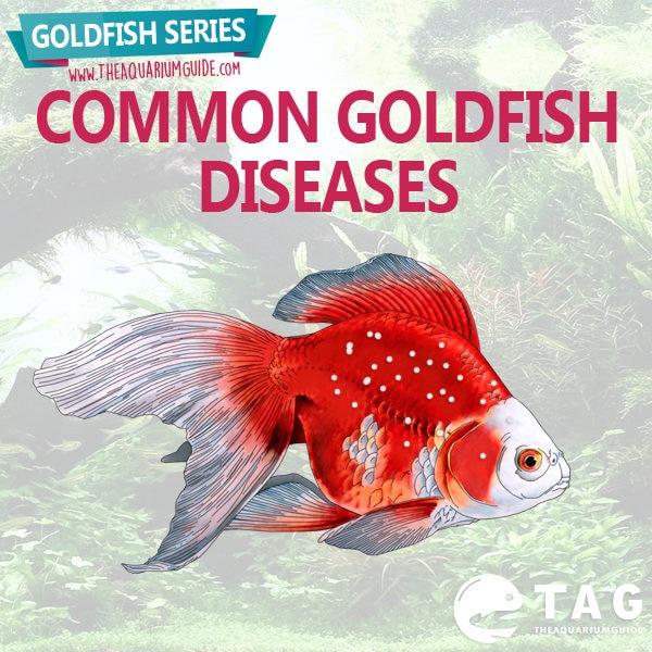 Goldfish Series - Common Goldfish Diseases