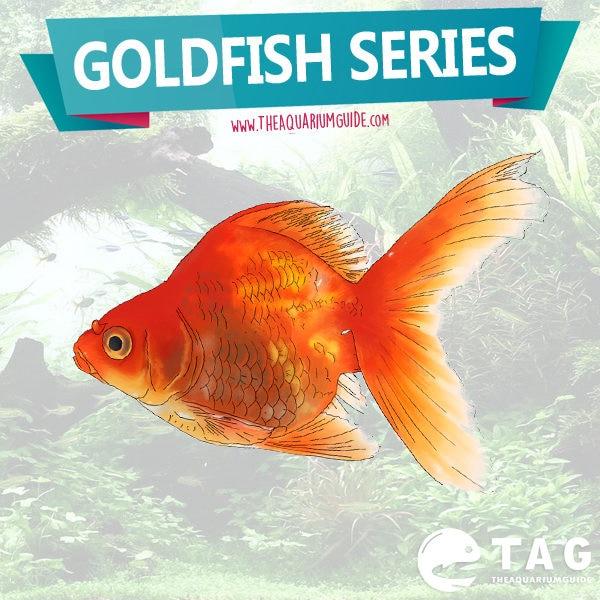 Goldfish Series - Goldfish Care Guide