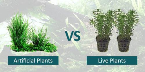 Live Plants vs Artificial Plants