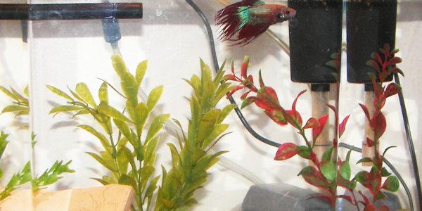 Best Filter for Betta Fish