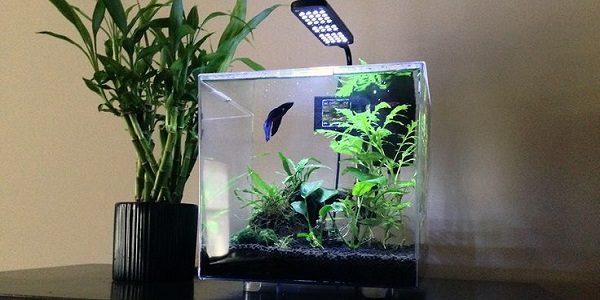 3-Gallon Cube Aquarium Kit