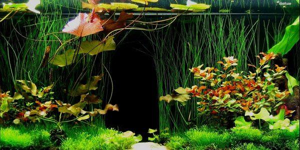 Fish Tank Background 2