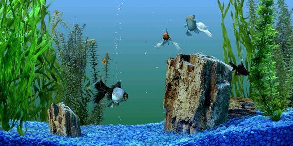 Fish Tank Background