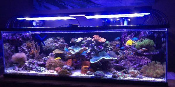 LED Aquarium Light 2