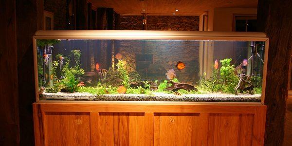 fish-tank-suppliers
