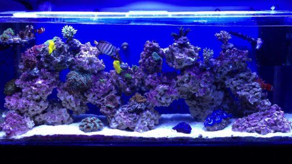 Aquarium Wavemaker