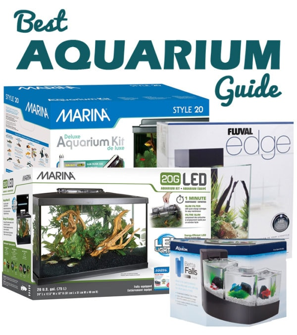 best aquarium guide