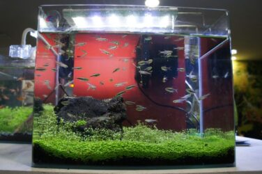 small fishes within a simple aquarium
