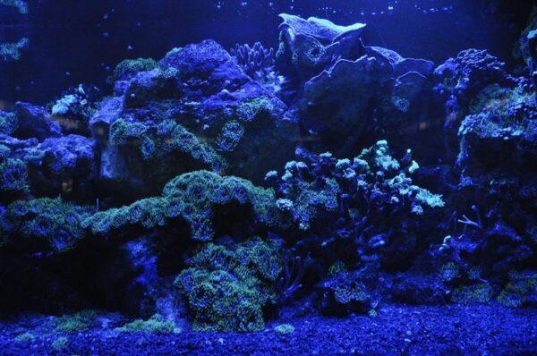 coral reef sea blue water aquarium