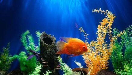 Best Tank for Betta Fish in 2021