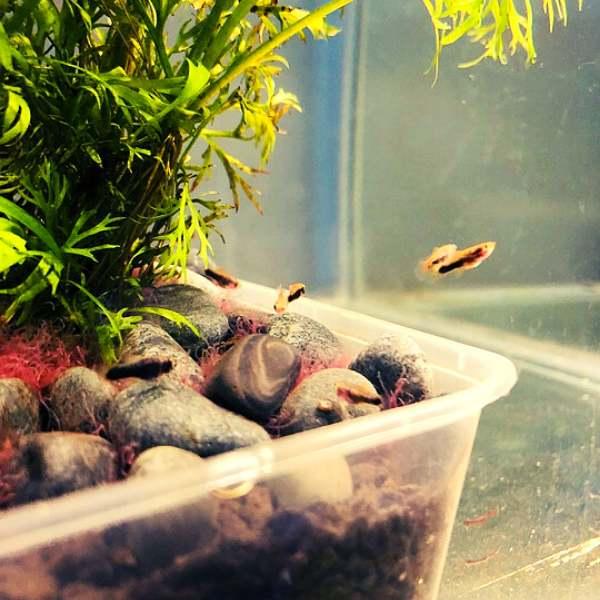 Aquarium substrate inside a tank