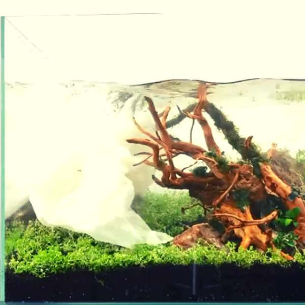 Effect of aquarium substrate when used in a tank