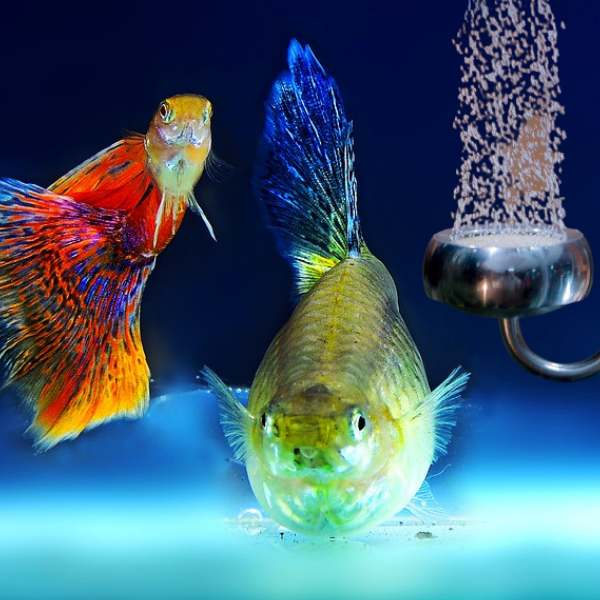 One of the best co2 diffuser inside a tank with fishes