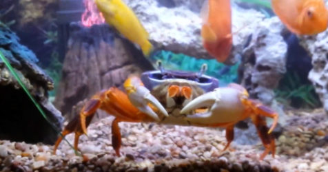 Moon Crab Overview