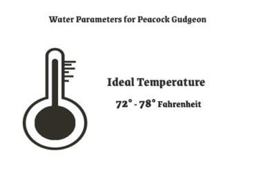 Water Parameters for Peacock Gudgeon