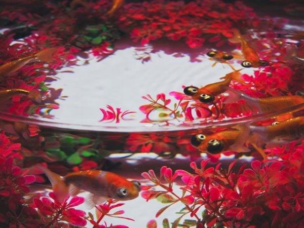 Decorations for Vampire Crab Tanks